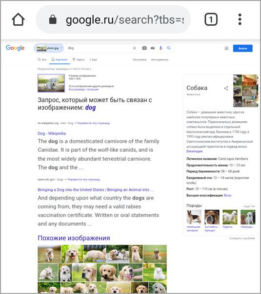 Поиск по картинке на телефоне Android и iPhone - YouTube | 568x950